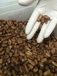 fèves de cacao rraw montreuil