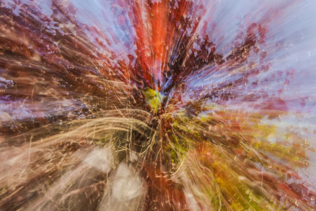 Auteur Kami Hazzaro – Feuillage Palette– Des Tours, détours #7  Appareil photo: NikonD7200 ; Objectif: 18-105mm ; Focale : 22 ; Distance Focale: 18mm ; Vitesse: 1 sec ; Sensibilité: 100 iso